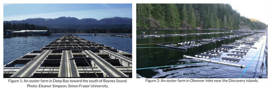 Two photographs showing Oyster farming structures.