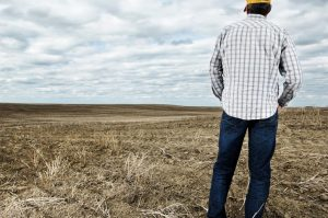 Photo shows a man with his back to the camera looking across a brown field