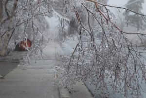 Photo shows ice covered branches