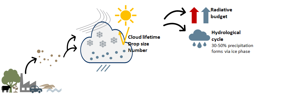 Graphic image showing how particles, including pollen, go up in to the atmosphere to form nucleation particles for ice clouds, which then affect how sunlight is reflected, and how water is redistributed through precipitation.